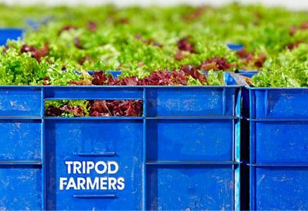 tripod farmers